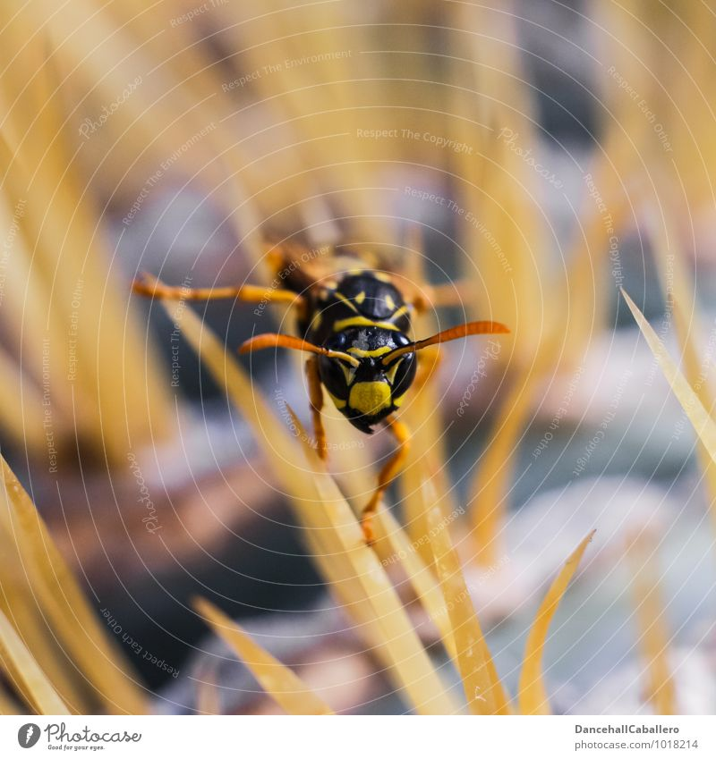 Nature Plant Animal Black Yellow Small Fear Esthetic Point Threat Adventure Insect Stress Crawl Thorny Feeler