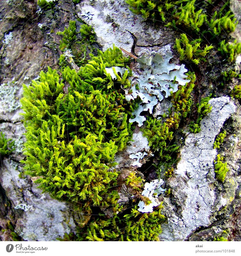 Nothing going on without moss Botany Moss Maturing time Agriculture Green Growth Black Forest Black Forest mountain Plant Macro (Extreme close-up) Close-up