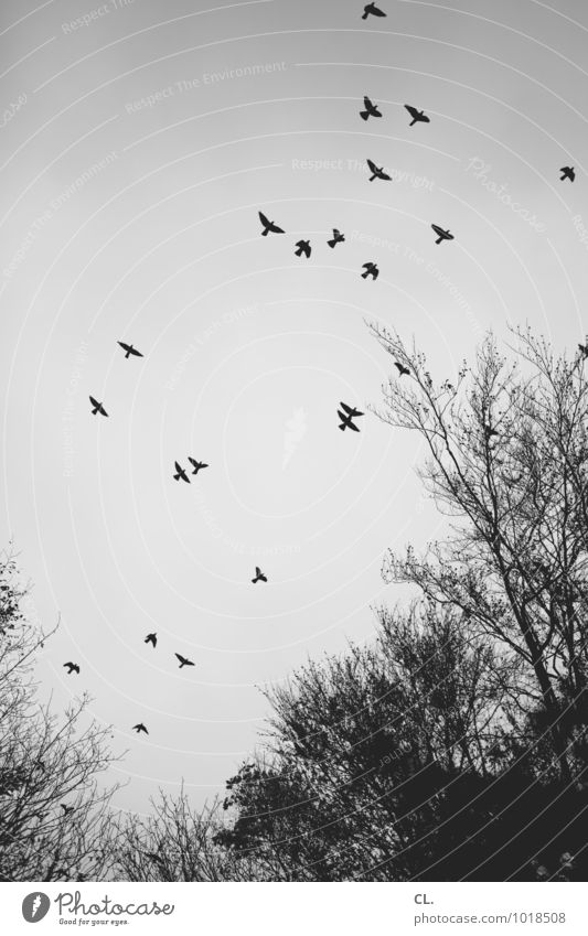 peep up Environment Nature Landscape Sky Autumn Winter Climate Weather Tree Branch Forest Animal Bird Wing Group of animals Flock Flying Free Infinity Freedom