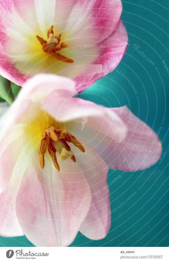 Nature Plant Beautiful Colour White Leaf Joy Environment Yellow Spring Blossom Pink Lifestyle Illuminate Esthetic Beginning
