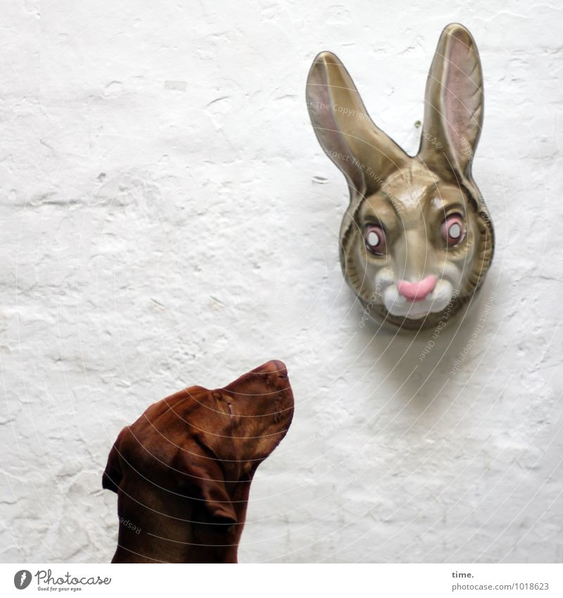 Dog Animal Wall (building) Wall (barrier) Time Perspective Wait Observe Communicate Curiosity Plastic Surprise Pelt Discover Watchfulness Mask