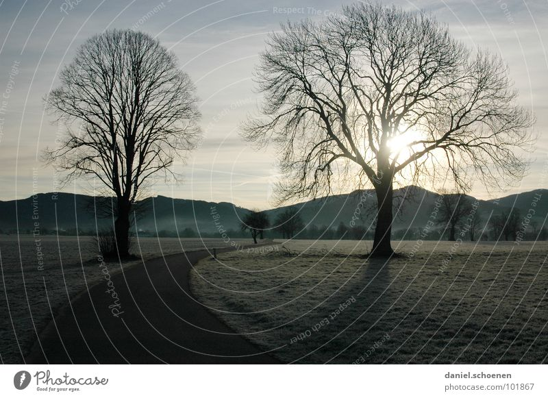 autumn morning Autumn Winter Direction Meadow Curved Tree Black Forest Hill Background picture Horizon Light blue Green Brown Field Footpath Sunrise Hoar frost