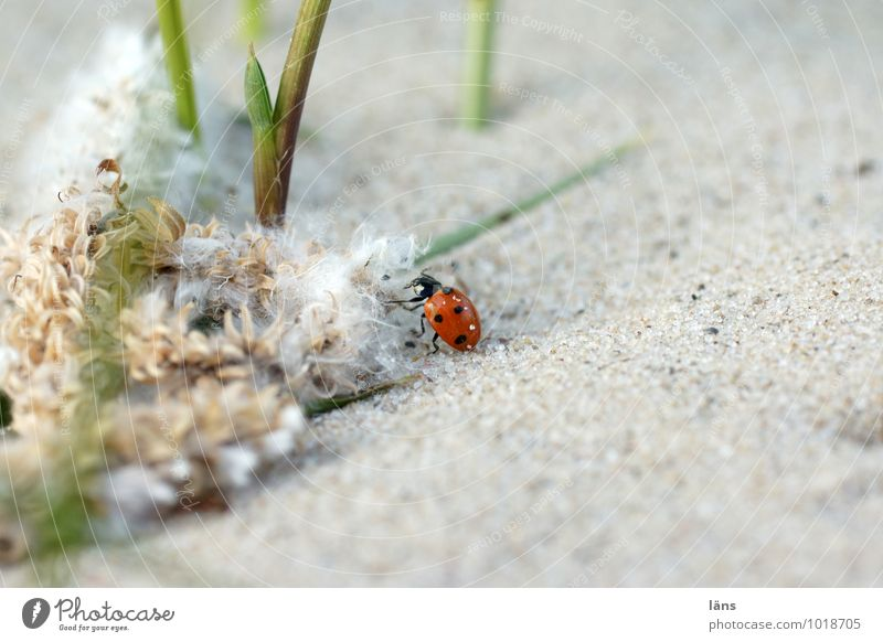 hiking day Environment Nature Landscape Sand Summer Plant Grass Coast River bank Animal Beetle Ladybird 1 Movement Discover Going Crawl Beginning Uniqueness