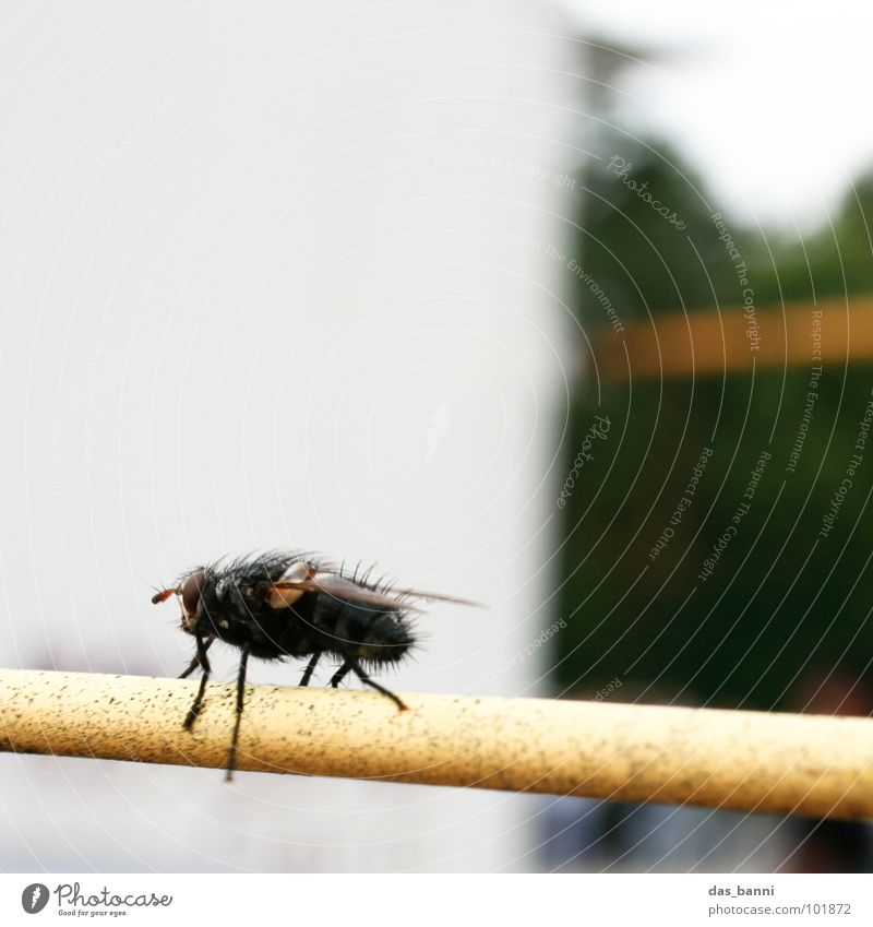 a fly picture Multiple Small Green Glittering Feeler Trunk Development Fence Yellow Depth of field Stay Insect Physics Bow Loneliness Buzz Crawl Annoy