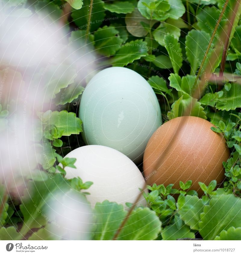 Egg Egg Egg Food Eggshell Spring Summer Plant Wild plant Lie Safety (feeling of) Hope Expectation Attachment Search Easter Deserted Shallow depth of field