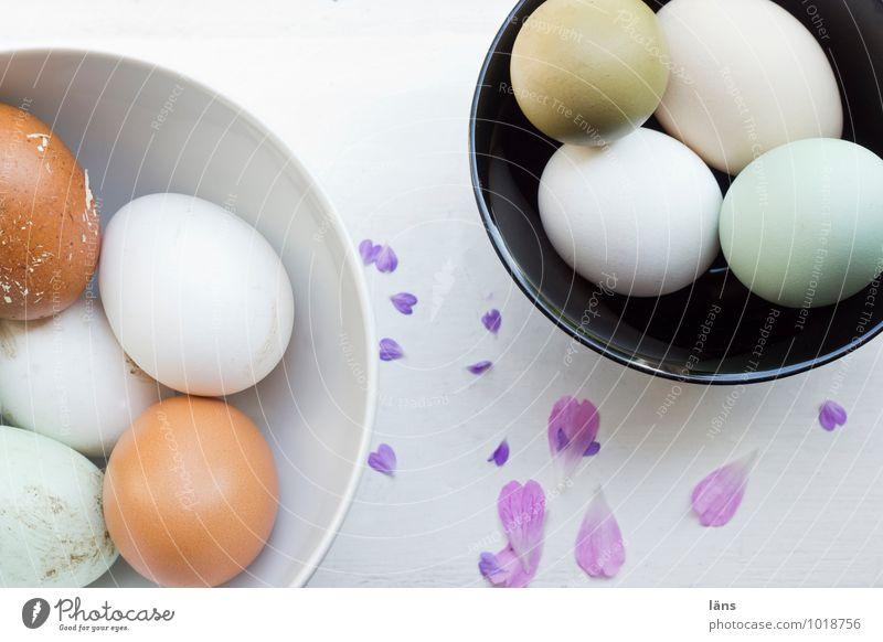 not egg_nerlei Food Egg Eggshell Bowl Living or residing Blossom Beginning Expectation Heart Easter Multicoloured Exterior shot Copy Space top
