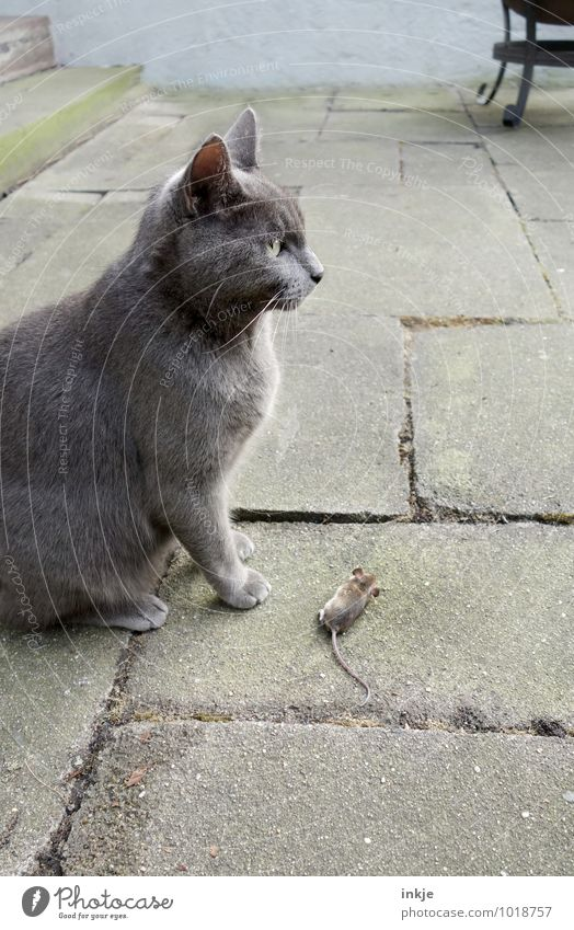 Cat Animal Emotions Death Small Lie Wild animal Success Pet Terrace Pride Endurance Mouse Survive Crouch Instinct