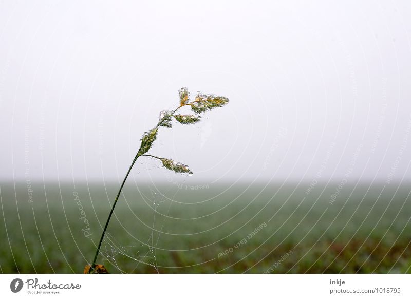Nature Plant Green Landscape Winter Cold Autumn Meadow Grass Air Ice Field Fog Fresh Drops of water Wet