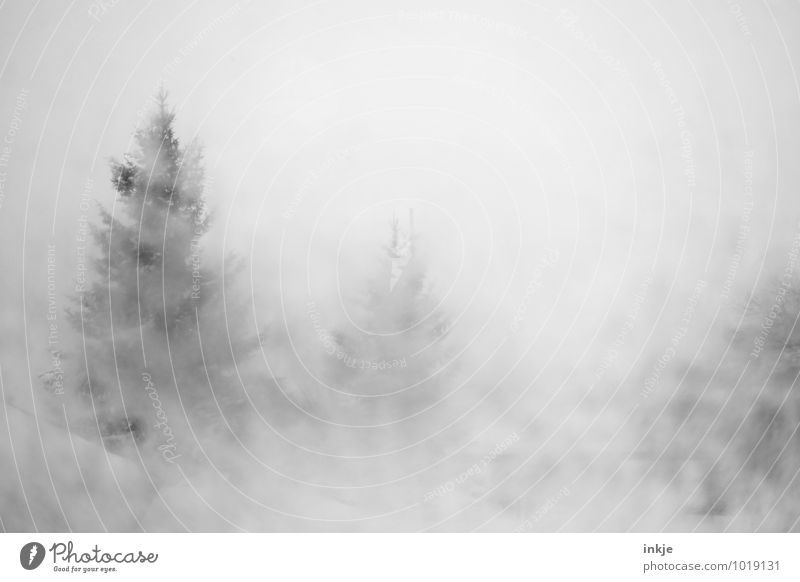Visibility below 50 meters Environment Nature Winter Climate Bad weather Fog Ice Frost Snow Snowfall Fir tree Coniferous trees Forest Mountain Cold Wet Sludgy