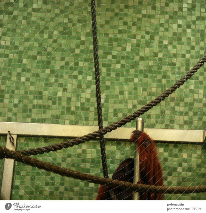Hand White Green Animal Metal Rope Climbing Pelt Zoo Tile Mammal Monkeys Sterile Cage Orang-utan