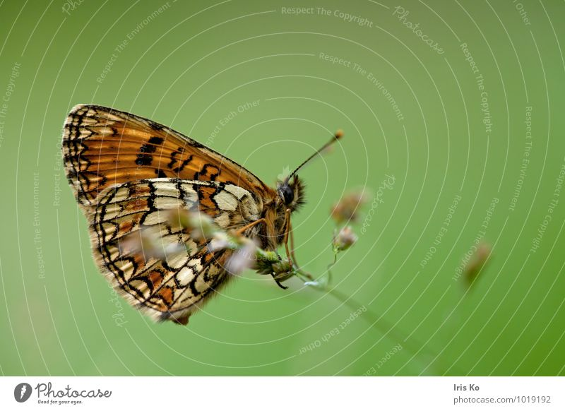 Nature Beautiful Green Summer Animal Forest Meadow Natural Garden Dream Orange Free Esthetic Wing Change Hope