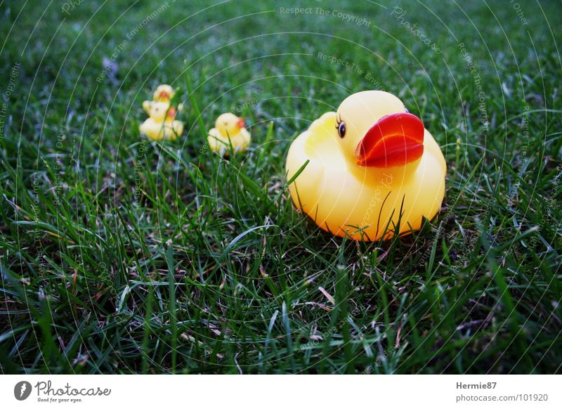 Green Summer Yellow Grass Garden Lake Lawn Duck Squeak duck
