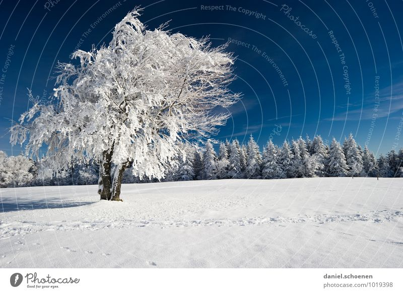 Nature Blue White Tree Landscape Forest Snow Ice Frost Cloudless sky