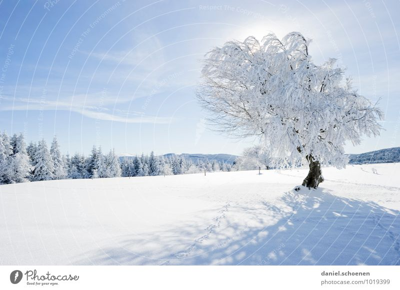 Maybe you will!? Nature Landscape Cloudless sky Beautiful weather Ice Frost Snow Tree Forest Hill Bright Blue White Relaxation Calm Deserted Copy Space left