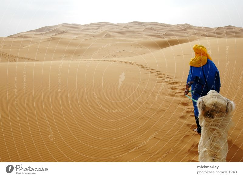 Vacation & Travel Far-off places Lanes & trails Sand Hiking Empty Adventure Africa Hill Beach dune Grain Camel Morocco Brand of cigarettes Dromedary