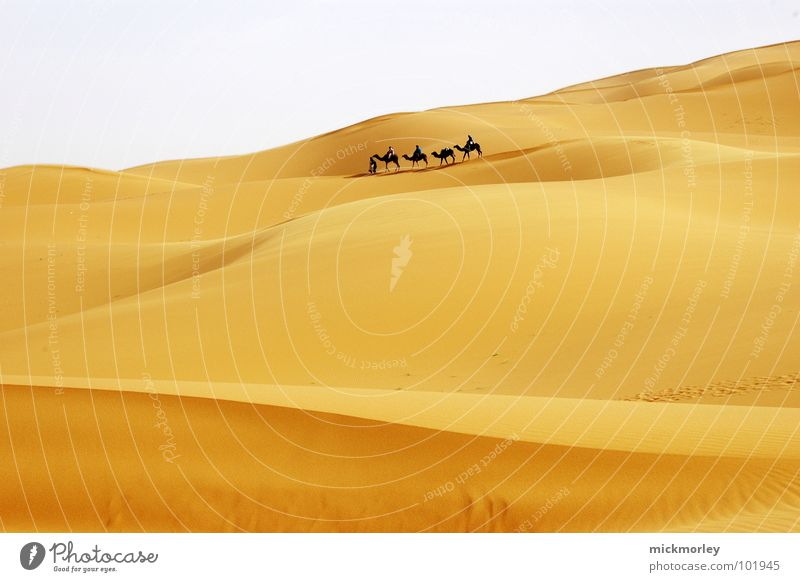 Sky Vacation & Travel Loneliness Yellow Sand Hiking Adventure Africa Desert Hot Beach dune North Embers Camel Morocco Dromedary