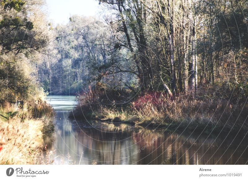 confluence Landscape Autumn Forest River Inn Backwater Rich pasture forest Kitsch river landscape Mouth of a river Colour photo Exterior shot Deserted Day