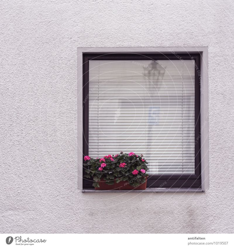 City White House (Residential Structure) Window Wall (building) Wall (barrier) Gray Pink Facade Decoration Gloomy Characters Blossoming Sign Curiosity