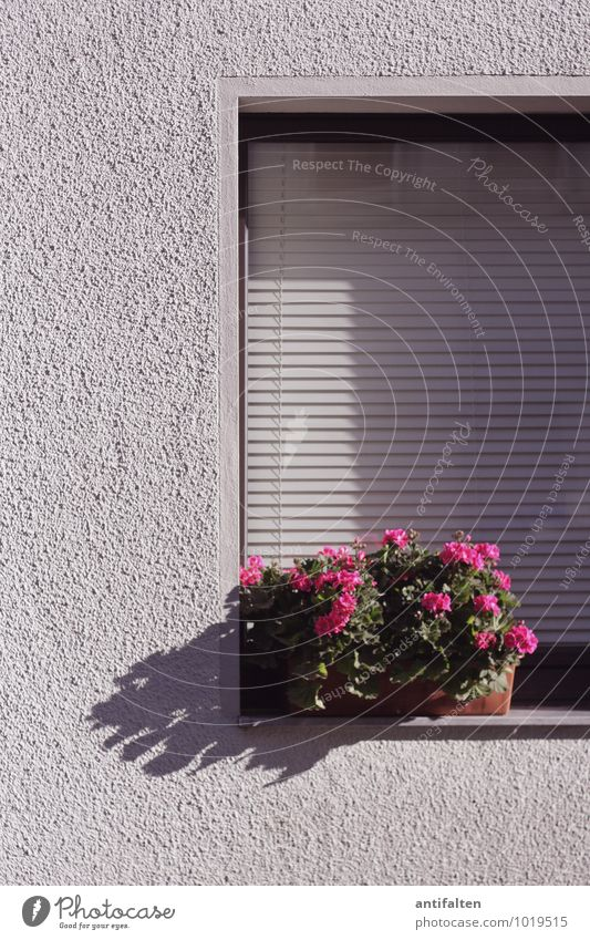 City White Summer Flower Leaf Joy House (Residential Structure) Window Wall (building) Blossom Spring Natural Wall (barrier) Line Pink Facade