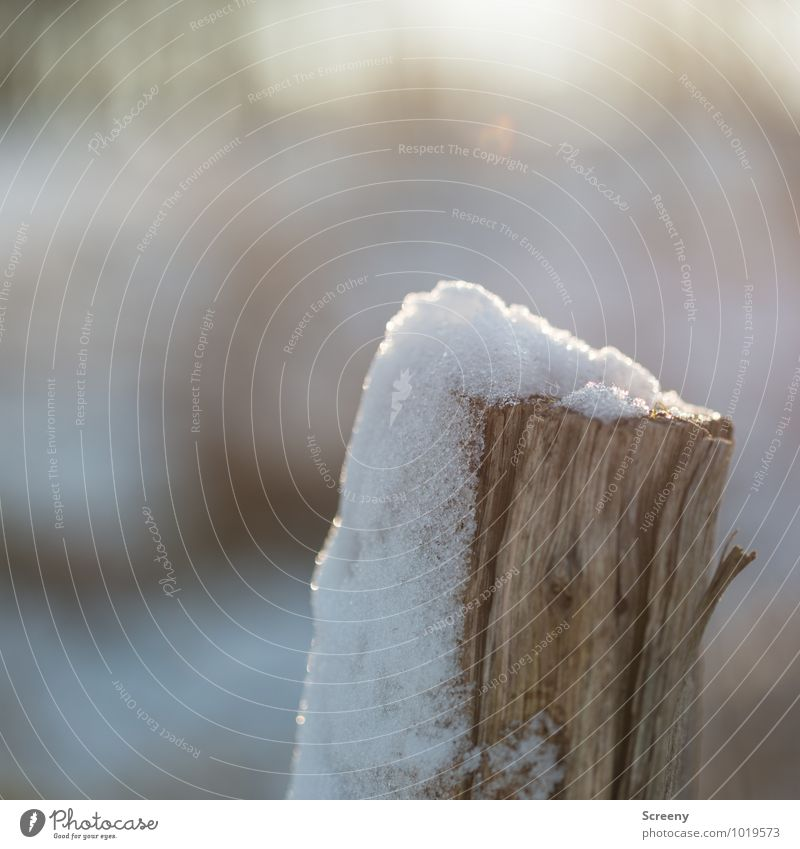 bonnet Environment Nature Winter Beautiful weather Ice Frost Snow Meadow Field Wood Cold Transience Wooden stake Melt Snow melt Blown away Colour photo
