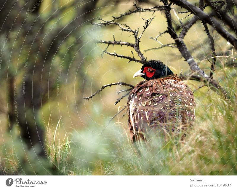 shy Environment Nature Meadow Animal Wild animal Bird Animal face 1 Looking Esthetic Natural Beautiful Green Red Moody Success Protection Loneliness Shame Fear