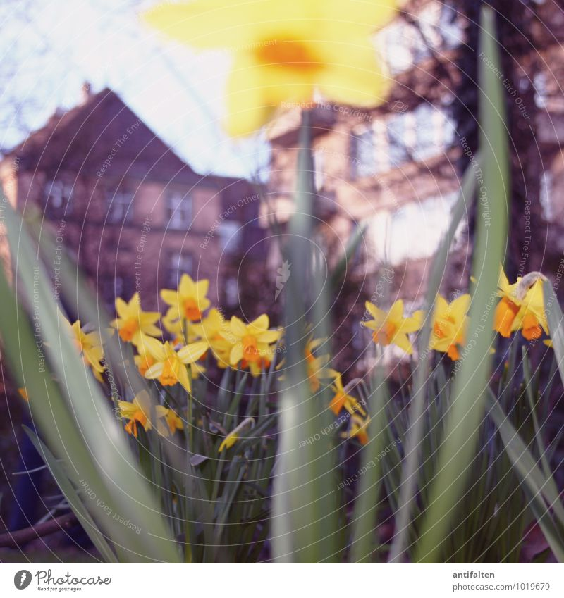 Nature City Plant Flower Leaf House (Residential Structure) Environment Yellow Meadow Blossom Spring Natural Garden Facade Park Weather