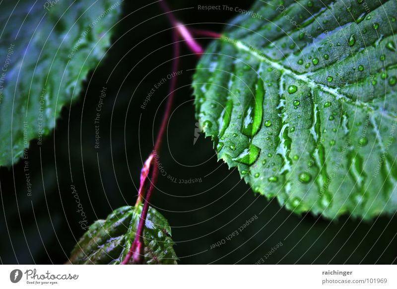 Nature Water Green Leaf Spring Rain Weather Drops of water Wet Rope Twig Gutter Waterproofing