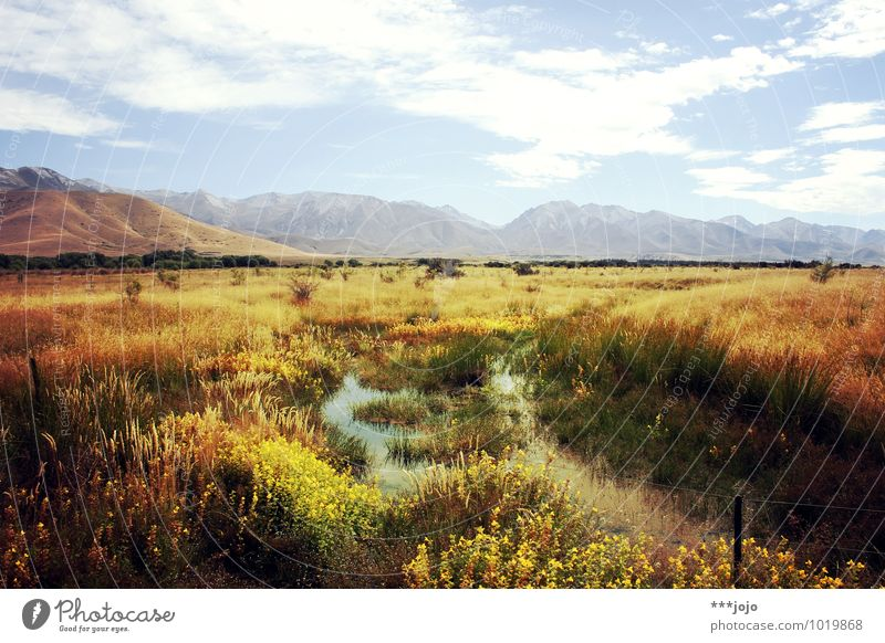 fields of gold. Vacation & Travel Tourism Far-off places Summer Mountain Hiking Nature Landscape Sky Beautiful weather Meadow Field Hill Alps southern alps Bog
