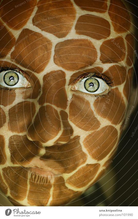 safari Safari Eyelash Animal Africa Mammal Giraffe wildlife Patch Mouth Saucer-eyed Eyes Neck pout self
