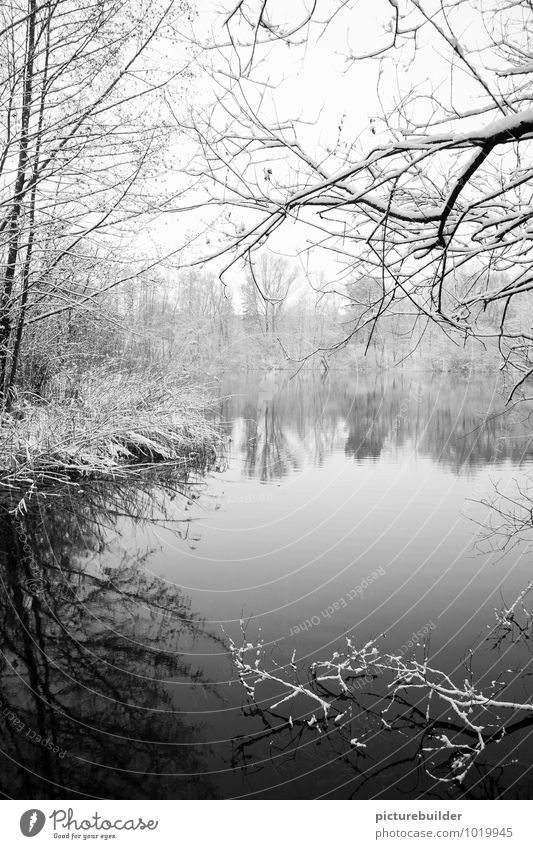 At the lake Winter Snow Nature Ice Frost Tree Lakeside Loneliness Cold Calm Black & white photo Exterior shot Copy Space bottom Copy Space middle Morning