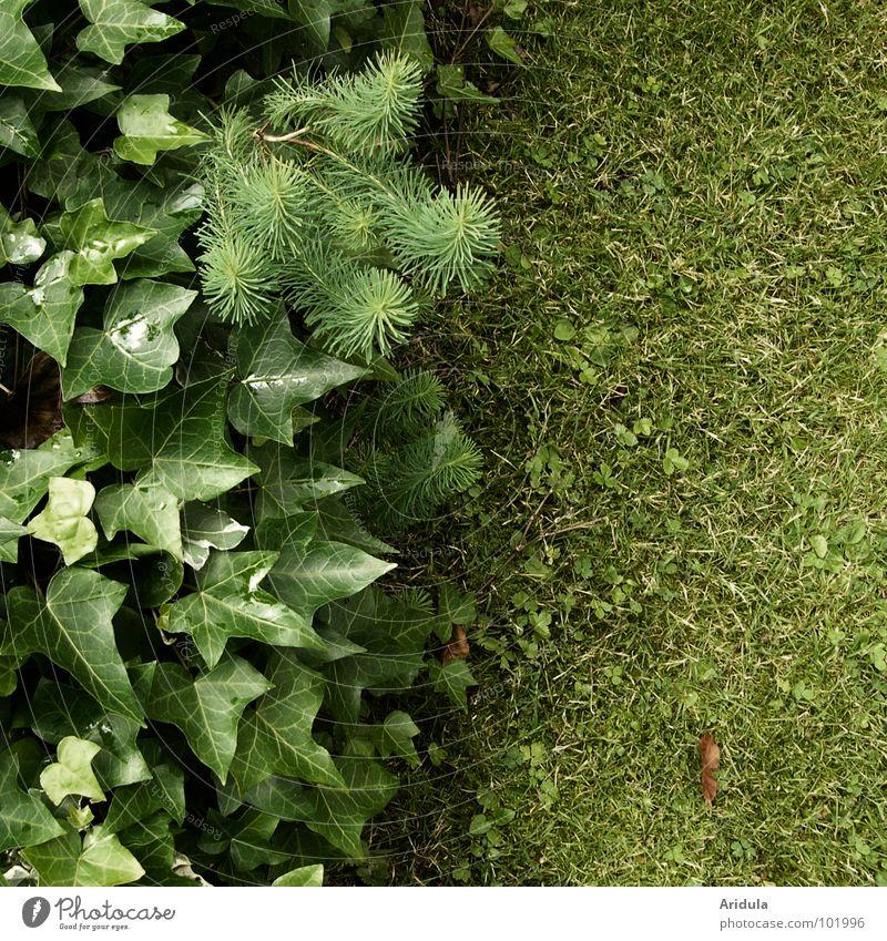 greenüüünnn Green Ivy Leaf Blade of grass Corner Structures and shapes Plant Summer Garden Park Lawn Nature Arrangement