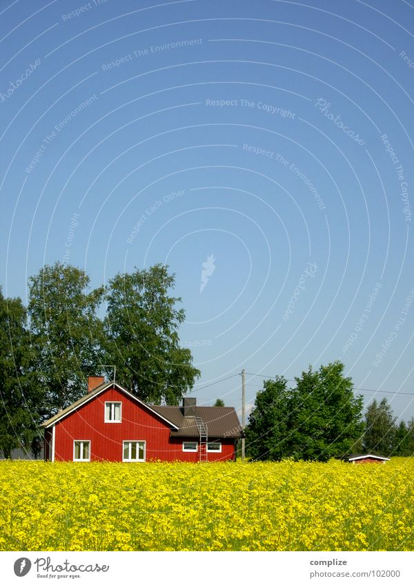 blue, green, red and yellow Beautiful Vacation & Travel Summer House (Residential Structure) Agriculture Forestry Cable Climate Weather Tree Field Hut Window