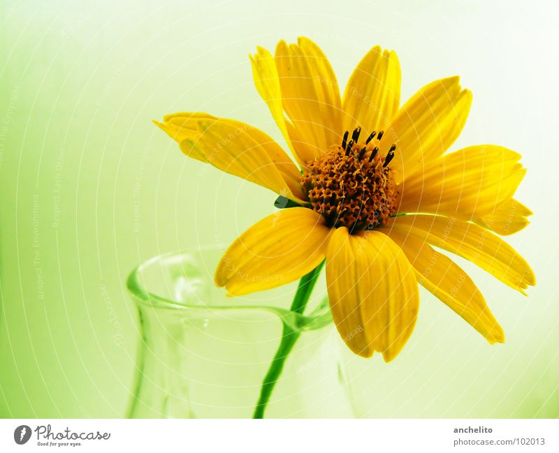 Nature Beautiful Flower Green Plant Calm Yellow Emotions Blossom Spring Happy Glass Soft Peace Delicate Blossoming