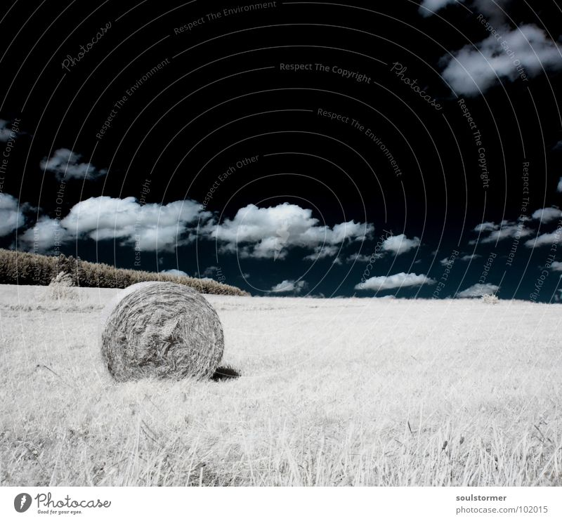 Hay bales in a different way... Infrared Infrared color Black filter Clouds White Wood flour Light Grass Meadow Plant Green Tree Edge of the forest