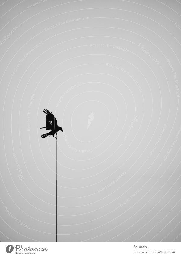 death messenger Animal Wild animal Bird 1 Flying Dark Success Power Brave Belief Grief Death Fear Effort Movement Loneliness Apocalyptic sentiment Threat Nature