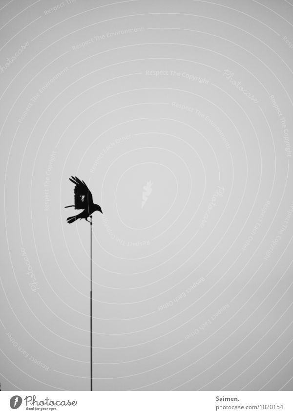 Nature Loneliness Animal Dark Environment Sadness Movement Religion and faith Death Flying Bird Fear Power Wild animal Success Wing