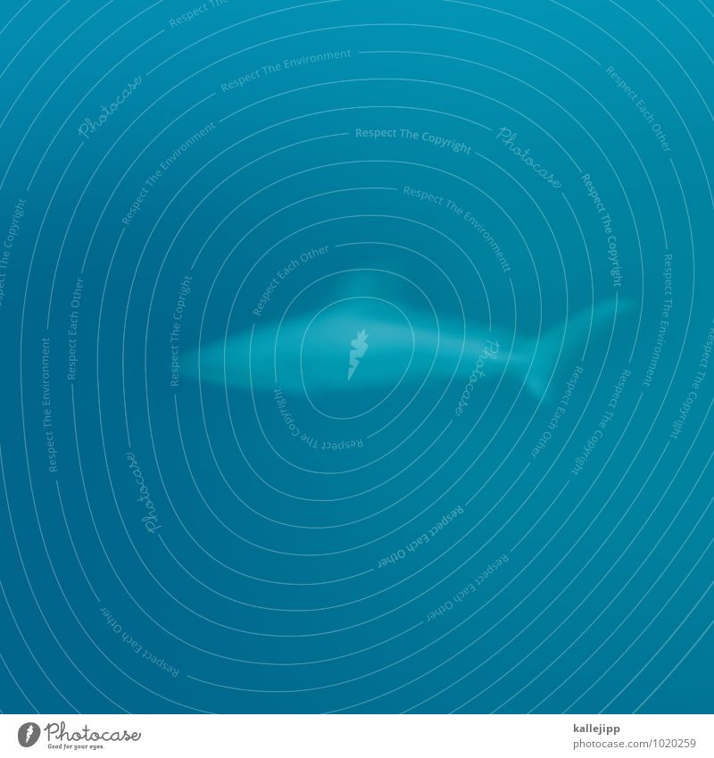 Nature Blue Water Ocean Animal Environment Swimming & Bathing Wild animal Threat Dive Shark Fin Predatory fish