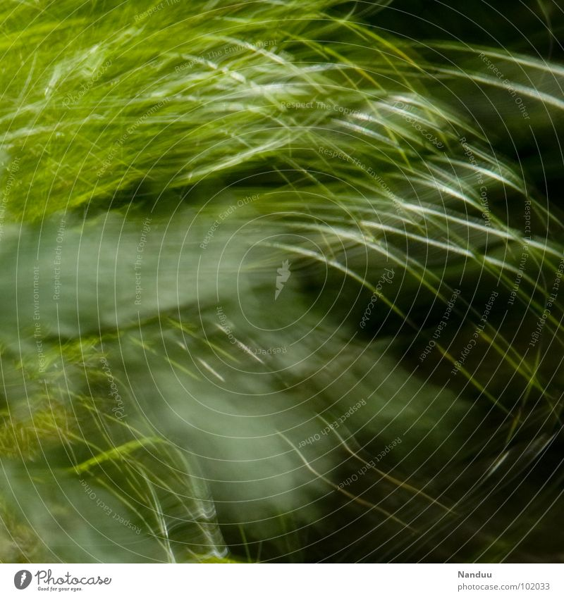 slip smoothly Blade of grass Meadow Abstract Blur Green Soft Cuddly Calm Relaxation Summer Background picture Square Fragile Transience Fleeting Sleep Dream