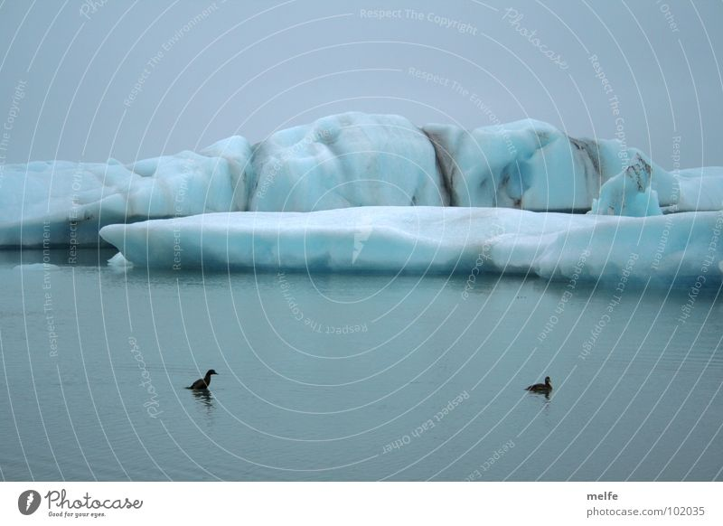 Water Sky Blue Winter Calm Cold Gray Ice Pair of animals Wet In pairs Freeze Duck Peaceful Melt