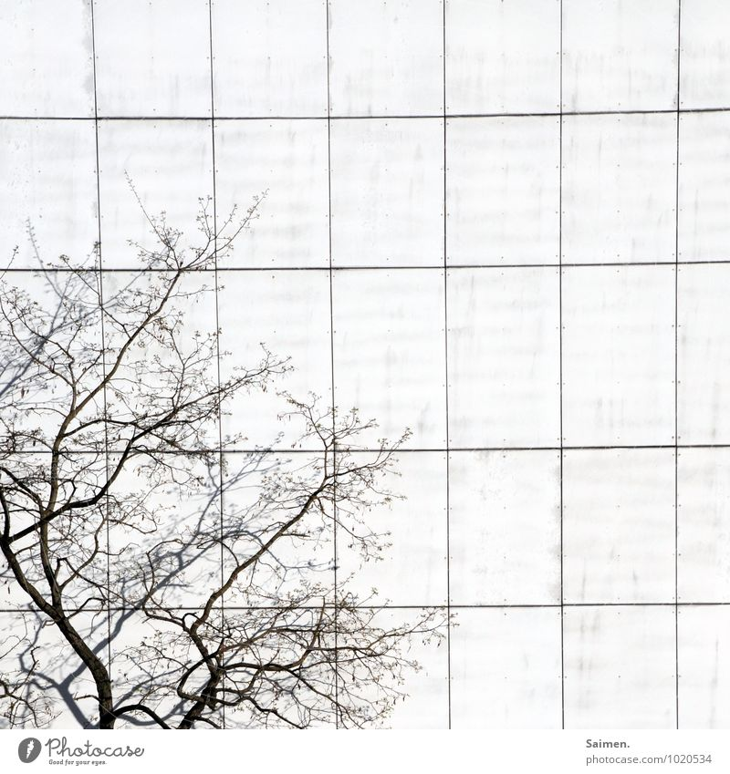Tree Wall (building) Wall (barrier) Line Facade Branch Square Sharp-edged Orderliness Border crossing