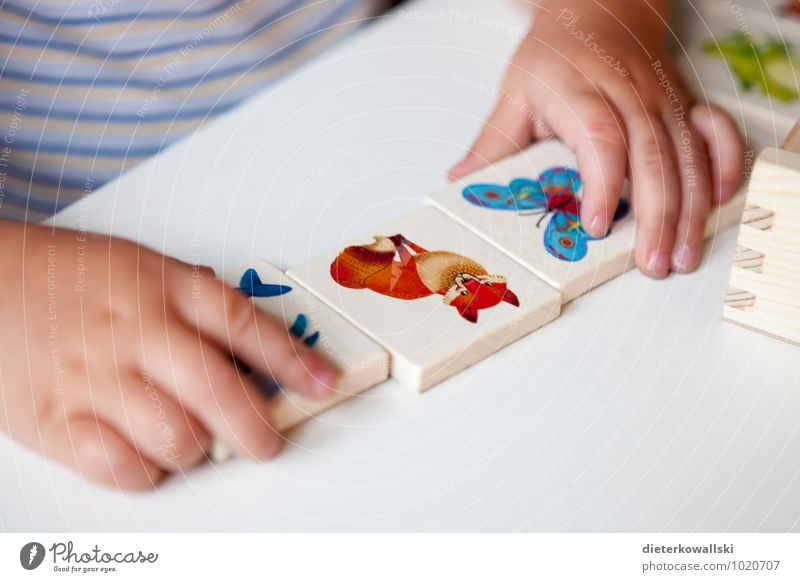 Small hands Playing Children's game Education Study Hand Fingers 1 - 3 years Toddler Fox Infancy Children`s hand memory Colour photo Interior shot