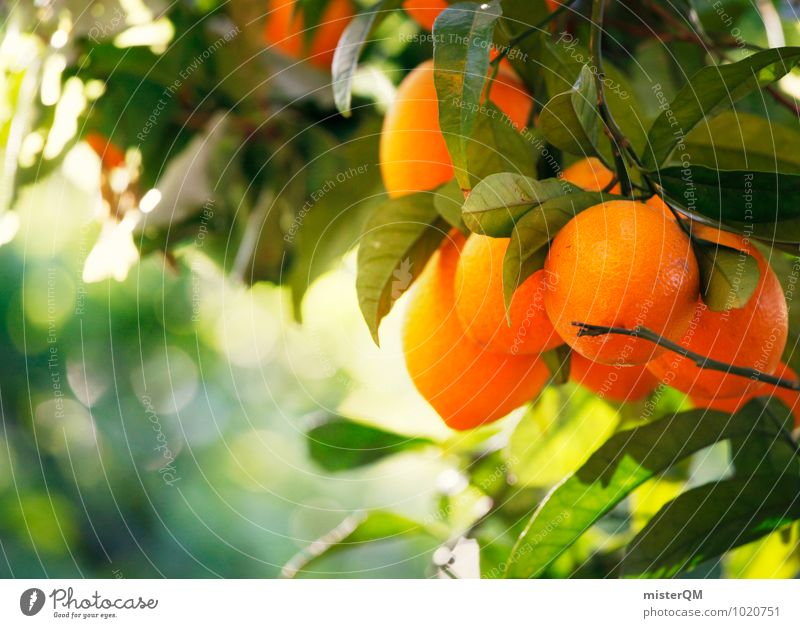 Nature Green Healthy Eating Environment Orange Esthetic Climate Delicious Spain Majorca Mature Vitamin C Tree Orange juice