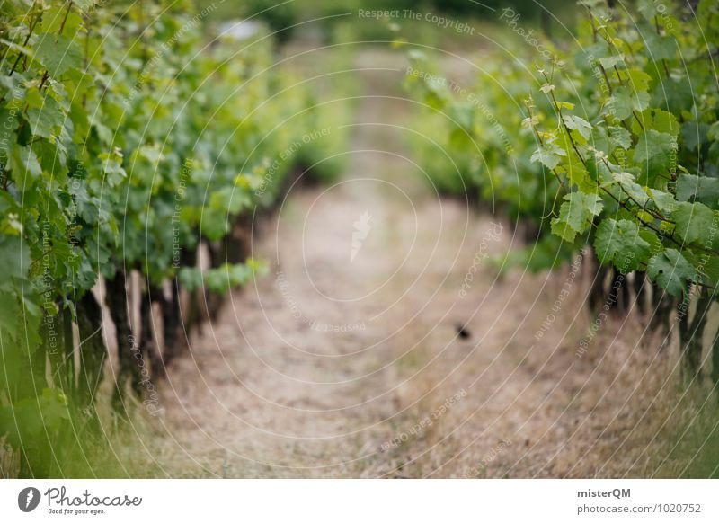 Weinhang. Landscape Vine Vineyard Wine growing Grape harvest Winery Lanes & trails Green Colour photo Subdued colour Exterior shot Day Shallow depth of field