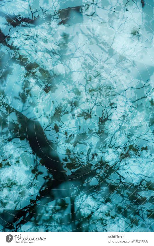 Dreamlike Plant Tree Dark Blue Branch Tree trunk Treetop Leaf Leaf canopy Gorgeous Pattern Double exposure Nightmare Blur Branchage Grief Wallpaper pattern