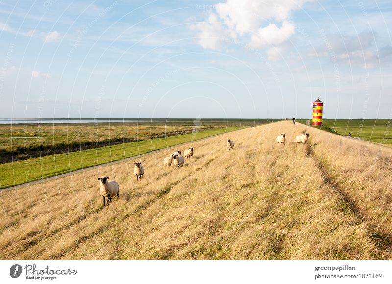 Mähfritzen in front of lighthouse - Pilsumer lighthouse Vacation & Travel Summer vacation Beach Ocean Easter Wedding Landscape North Sea Dike Coast crumhorns