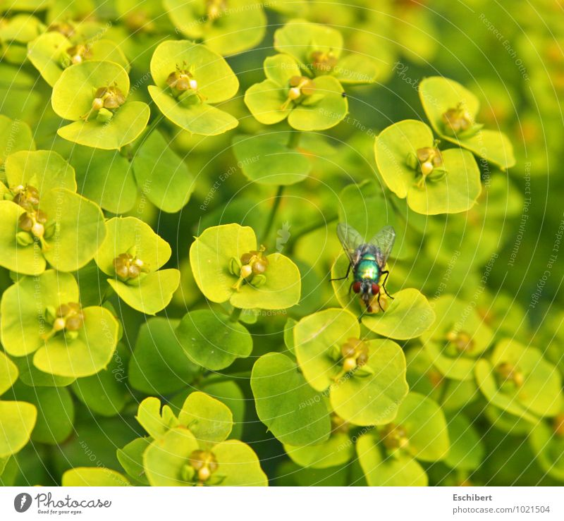 Jugglery or even plant superiority! Breakfast Trip Cycling tour Nature Plant Animal Flower Blossom Wild plant Garden Wild animal Fly Animal face Wing 1