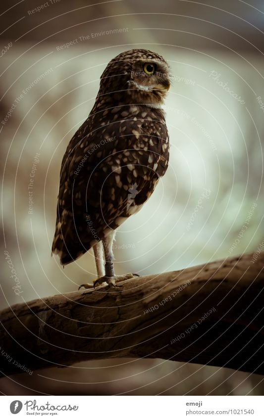 owl Animal Wing Zoo Owl birds 1 Baby animal Exceptional Dark Colour photo Exterior shot Deserted Day Twilight Low-key Shallow depth of field Full-length