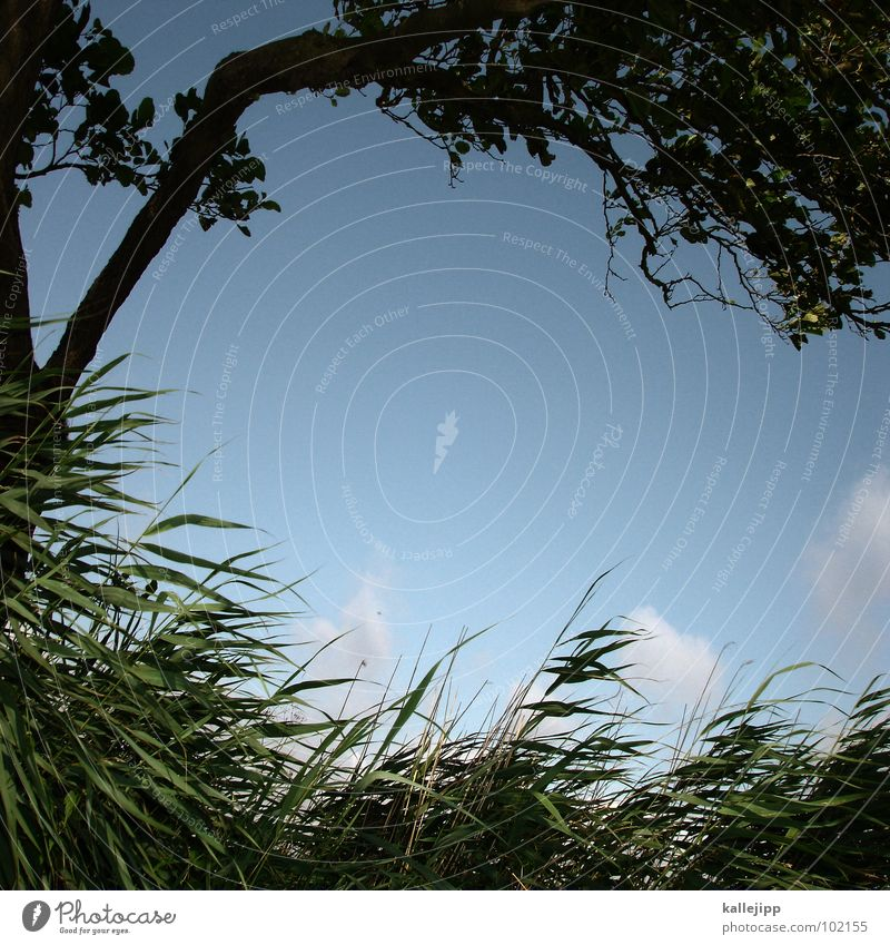 Sky Nature Water Green Tree Vacation & Travel Plant Beach Relaxation Grass Coast Sand Lake Air Weather Wind