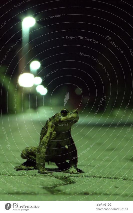 SpaceFrog Green Night shot Long exposure Sidewalk Lantern Animal Exceptional Threat Posture Behavior Painted frog space rebelled Sit Stand
