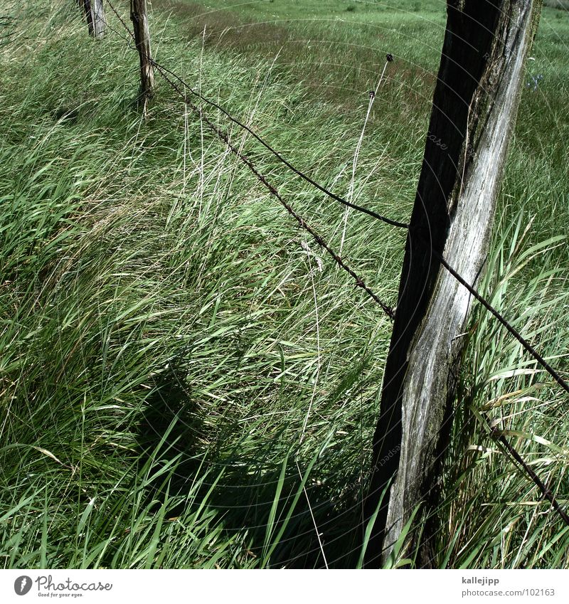 Green Grass Wood Horse Derelict Agriculture Pasture Fence Sheep Pole Juicy Barbed wire Green space